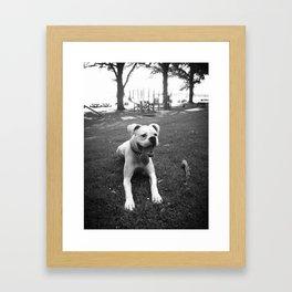 Ziggy black and white Framed Art Print