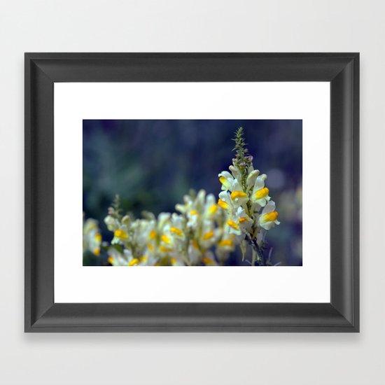 Toadflax flowers 5067 Framed Art Print