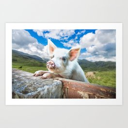 Cute White Pig Looking Over Wall Art Print