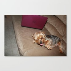 little yorkie Canvas Print