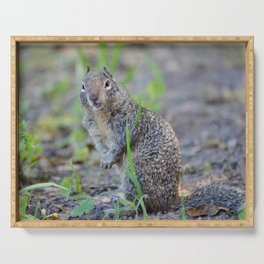 ground squirrel greeting Serving Tray