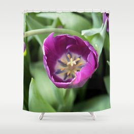 Longwood Gardens Orchid Extravaganza 30 Shower Curtain