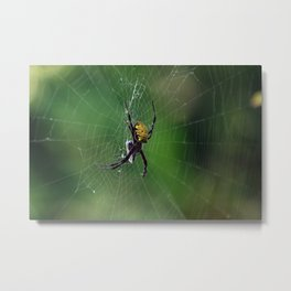 spiddy Metal Print
