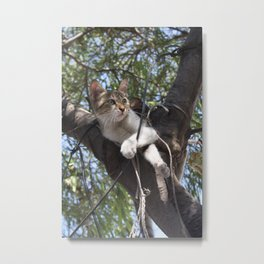 Bi Colour Tabby Cat In Tree 2 Metal Print