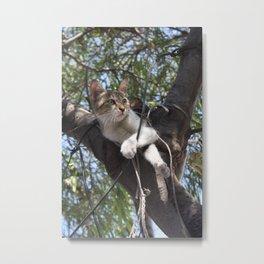 Bi Colour Tabby Cat In Tree 2 Metal Print