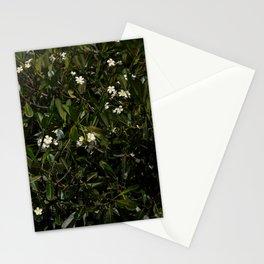 Bonitu i Flores Plumeria Stationery Cards