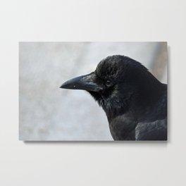 Crow Close Up Metal Print