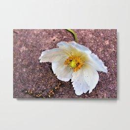 White flower on floor Metal Print