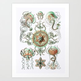 Ernst Haeckel - Trachomedusae (Jellyfish) Art Print