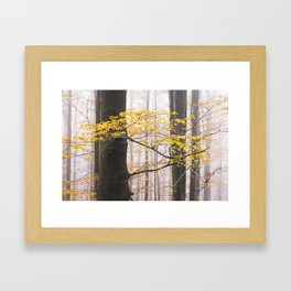 Detail of the branch of a big beech tree with golden leaves of autumn Framed Art Print