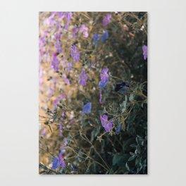 The Ordinary Wayside Flower Canvas Print