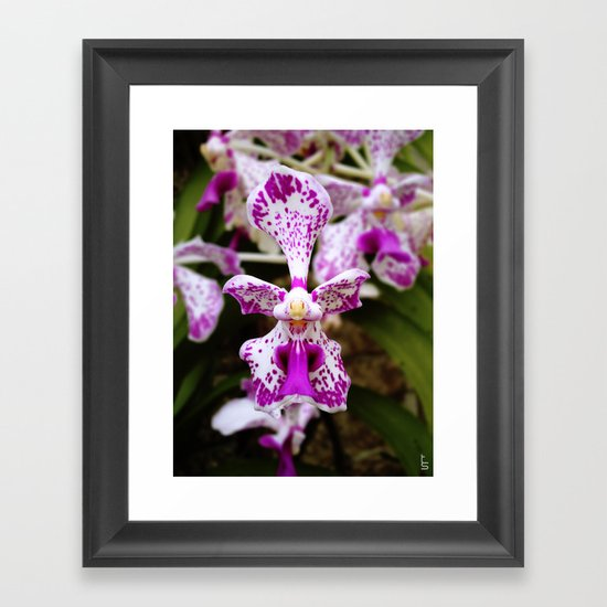 Wild Orchid (Pink & White) Framed Art Print