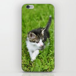 Kitten in the grass iPhone Skin