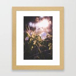 Spring sunshine Framed Art Print