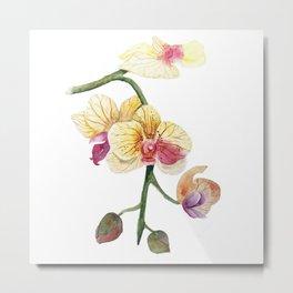 Hand drawn watercolor pretty orchidea Metal Print