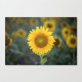 Tournesol jaune Canvas Print