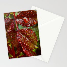 Rose Leaves After Rain Stationery Cards