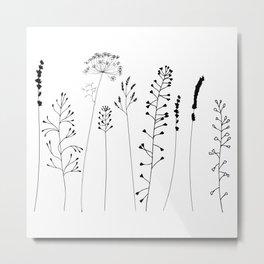 Meadow flowers and plants. Metal Print