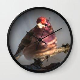 March Purple Finch Wall Clock