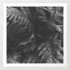 Colorless Fern Art Print