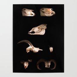 Skull Cabinet Poster