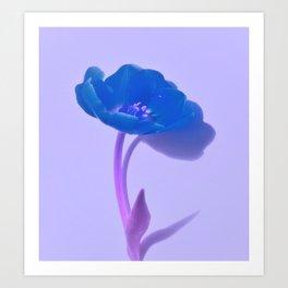 The blue tulip Art Print