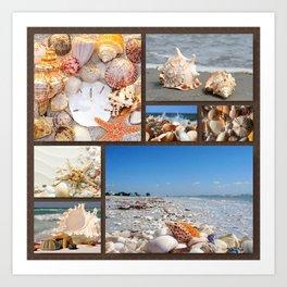 Seashell Treasures From The Sea Art Print