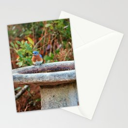 Bluebird On Birdbath Stationery Cards