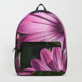 Spectacular African Daisy Backpack