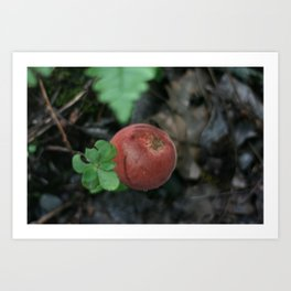 Smoky Mountain Mushroom Art Print