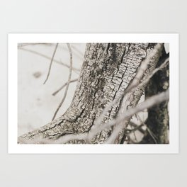 Dead Tree Bark Texture Photograph Art Print