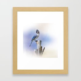 Blue Jay bird perched,watercolor painting Framed Art Print