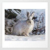 Snowy Bunny  Art Print