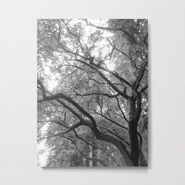 muir woods #1 Metal Print