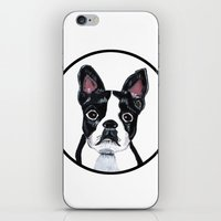 boston terrier iPhone & iPod Skins featuring Boston Terrier  by Lorraine Stylianou