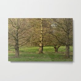 Winter Trees in the Park Metal Print