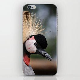 Grey Crowned Crane iPhone Skin