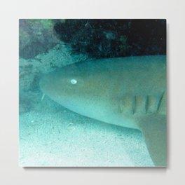Watercolor Shark, Nurse Shark 01, St John, USVI, Nighttime on the Reef Metal Print