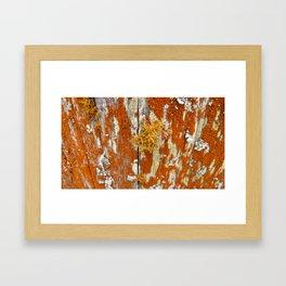Scratching the Surface Framed Art Print