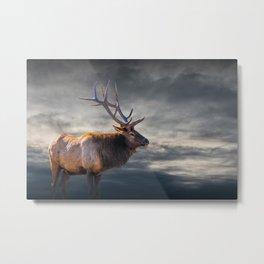 Bull Elk in Yellowstone National Park Metal Print
