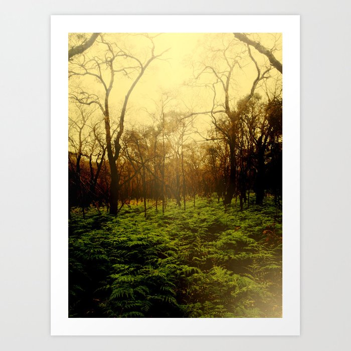 Lambent Woods Art Print
