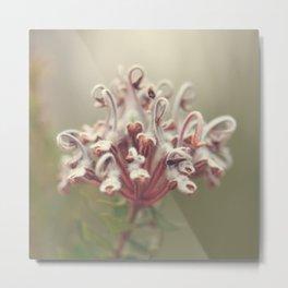 Grey Spider Flower Metal Print
