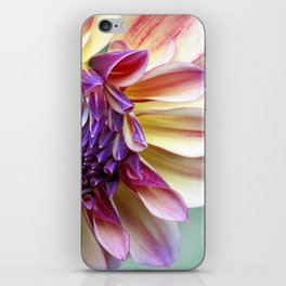 Purple and Yellow Dahlia iPhone Skin