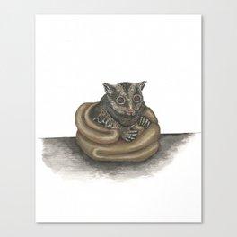 Cute Sugar Glider Canvas Print