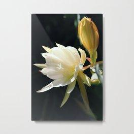 flower Königin der Nacht Metal Print