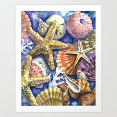 Seashells 2 Art Print
