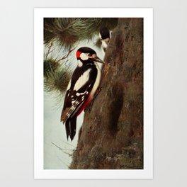 Kuhnert, Friedrich Wilhelm (1865-1926) - Wild Life of the World 1916 v.1 (Spotted Woodpecker) Art Print