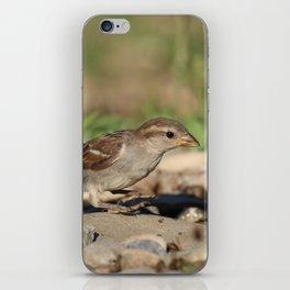 Young sparrow at watter iPhone Skin