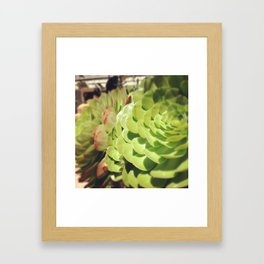 Dana Point Harbor Succulents Framed Art Print