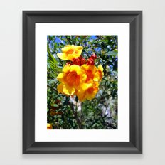 Yellow Trumpets Framed Art Print